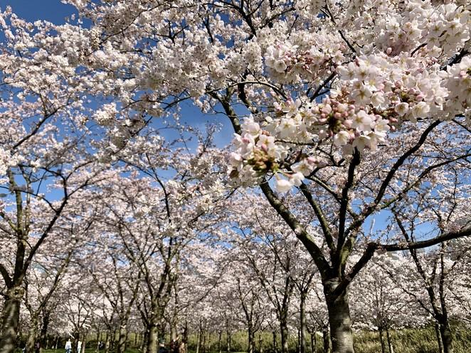 bloesempark-in-het-amsterdamse-bos