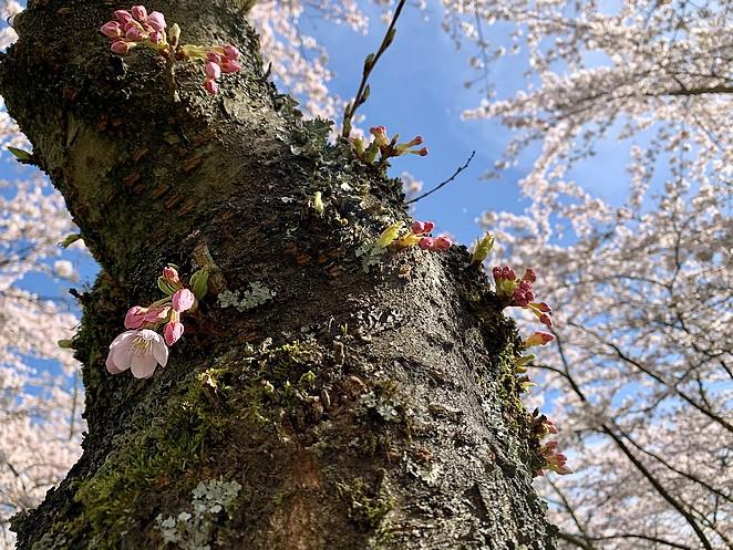 bloesems-in-bloei-maart