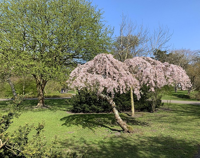 bomen-azie-zuiderpark