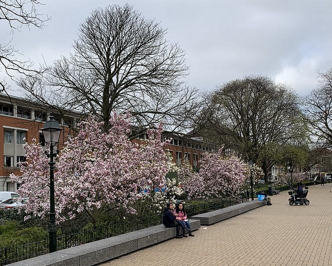 huijgenspark-bloesem