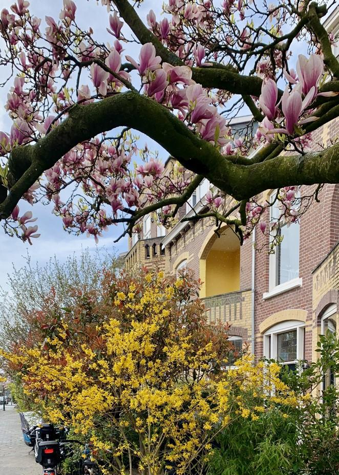 lentebomen-den-haag