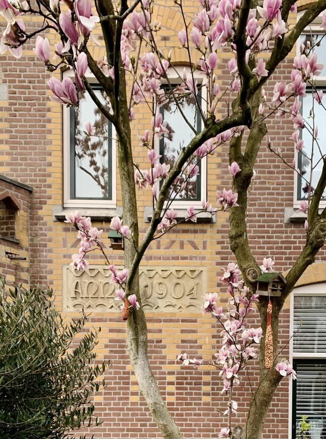 magnolia-huis-den-haag
