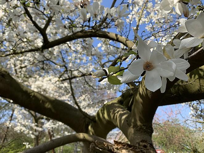 magnolia-zuiderpark-den-haag