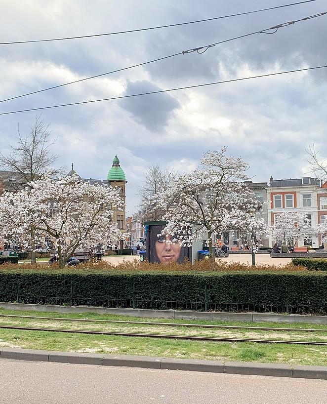 prins-hendrikplein-bloesem