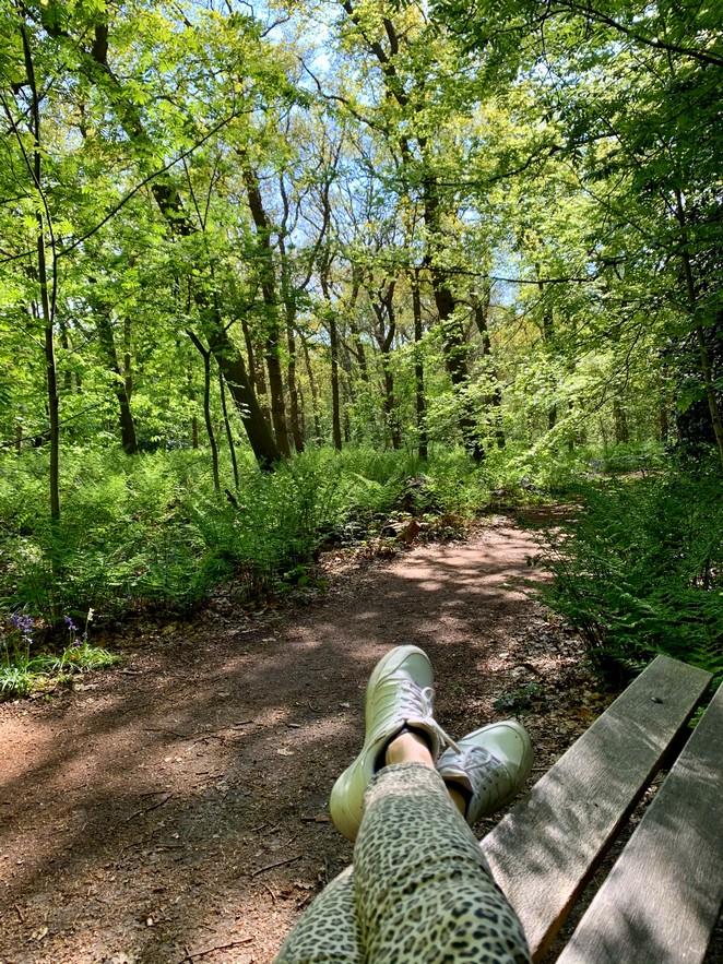 bankje-in-het-bos