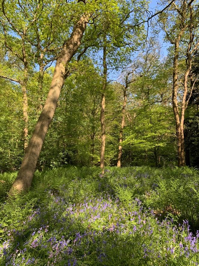 bos-met-hyacinten