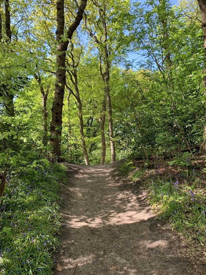 heuvelachtig-bos-den-haag