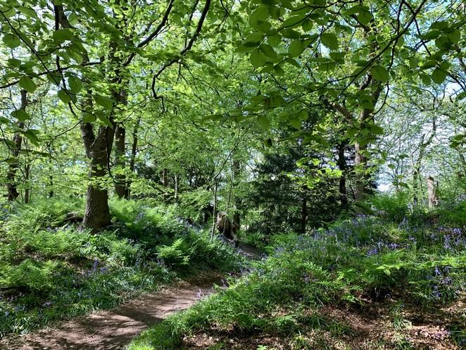 hyacinten-wandeling