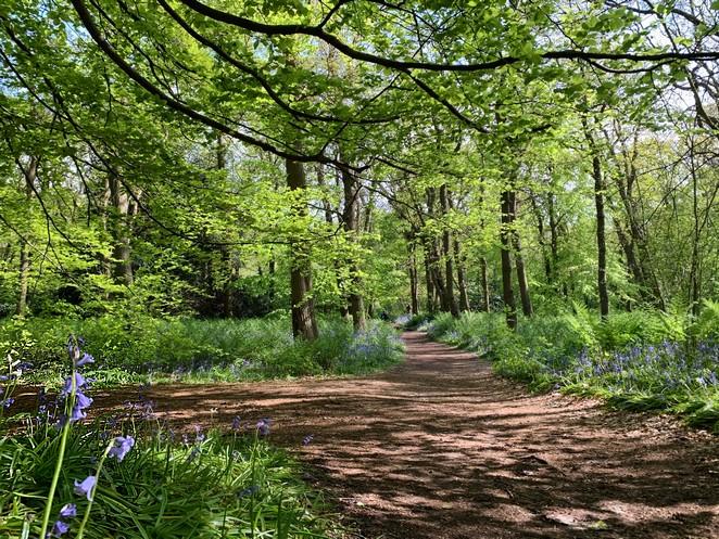 hyacintenbos-landgoed-ockenburgh