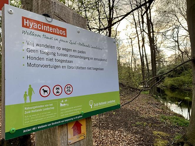 hyacintenbos-zuid-hollands-landschap