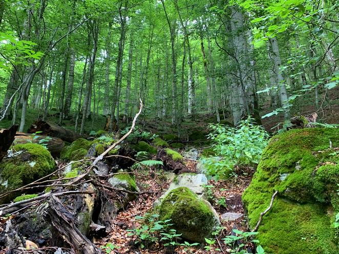 regenwoud-europa