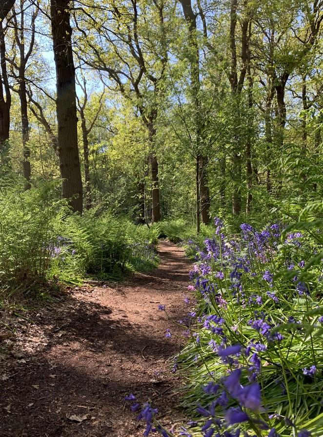 wandelen-hyacintenbos