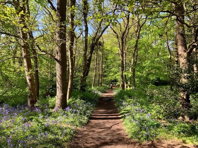 wandeling-hyacintenbos