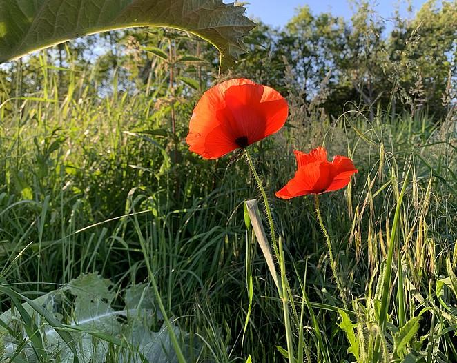 mooie-wandeling-juni