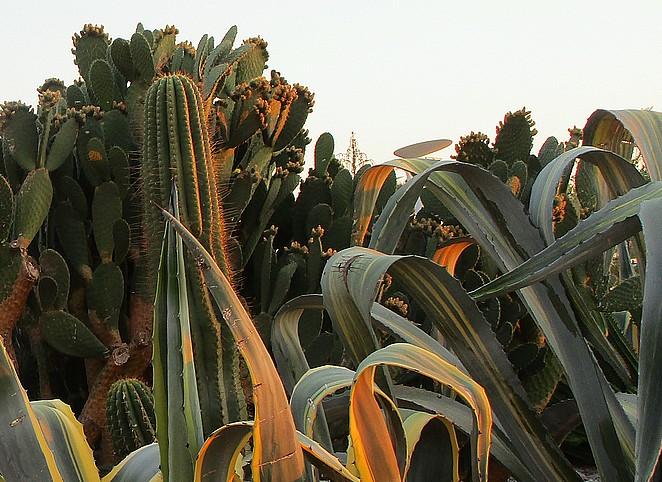 botanische-tuin-zuid-frankrijk