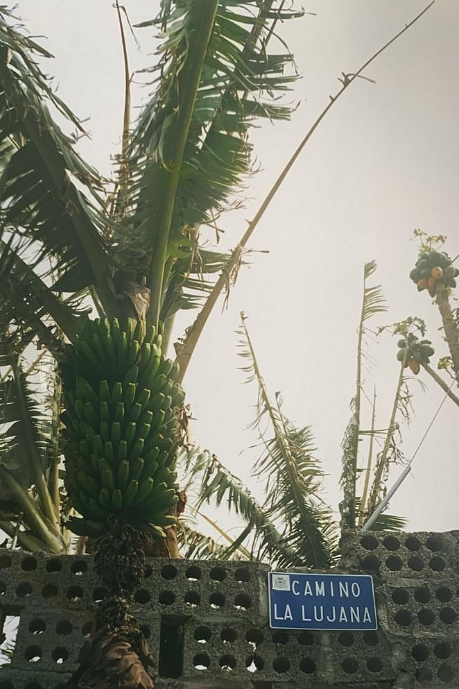 bananen-la-palma