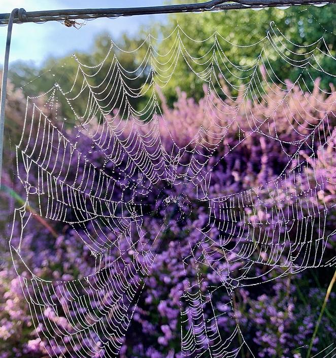 heide-spinnenweb