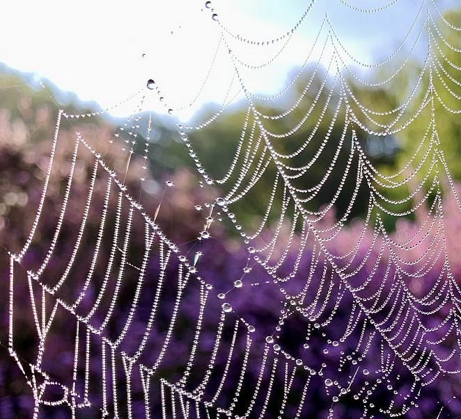 spinnenweb-dauwdruppels